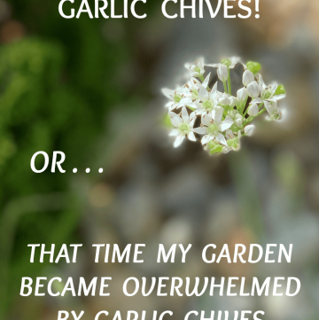 garlic chives invasion