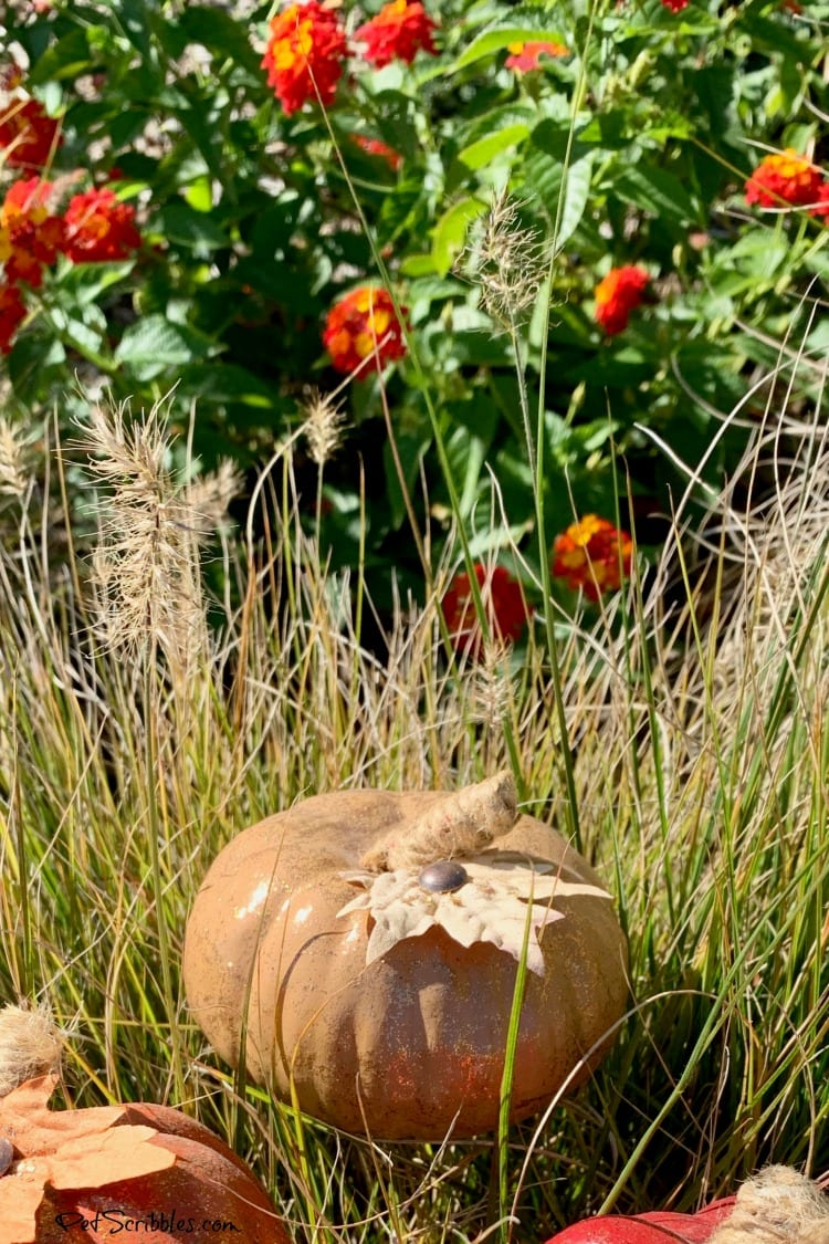 glittered pumpkin with lantana in the garden