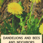 Dandelions and bees and your neighbors