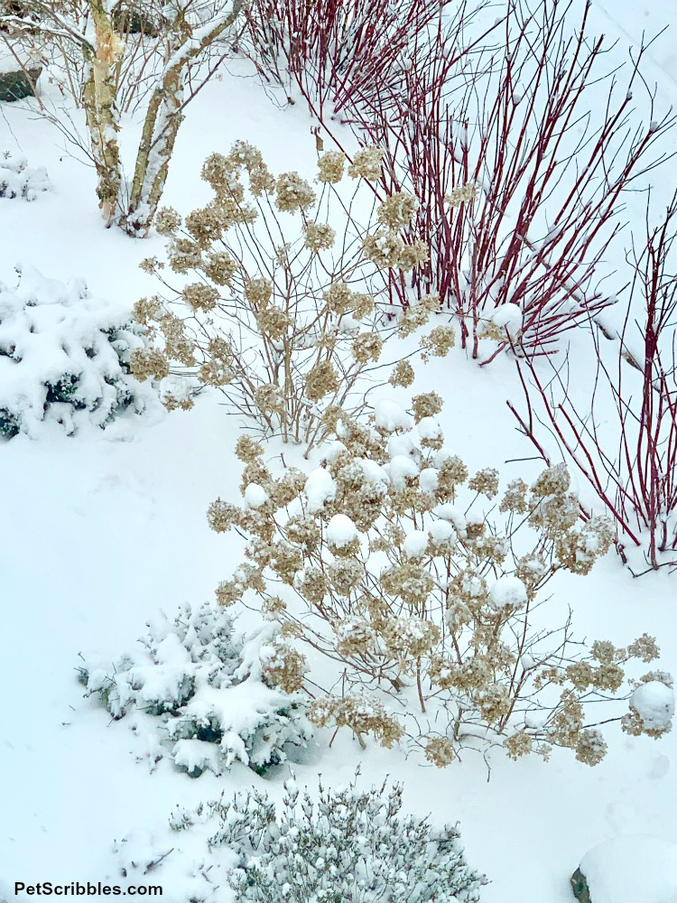 Winter interest garden with snow