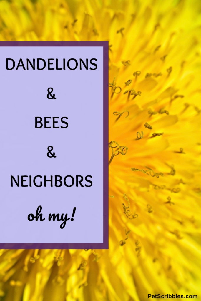 dandelions and bees and neighbors, oh my!