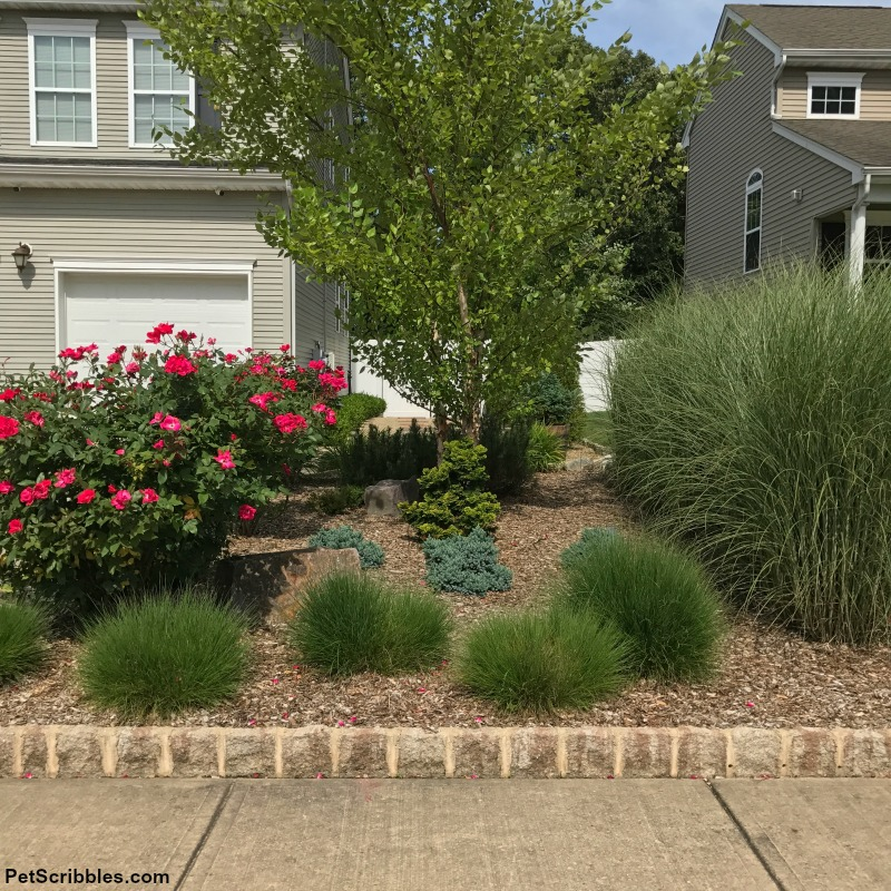 short and tall ornamental grasses