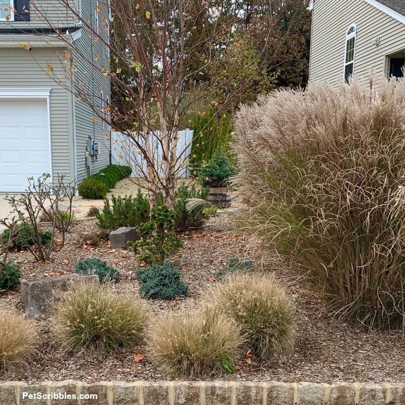 tall ornamental grasses in Fall