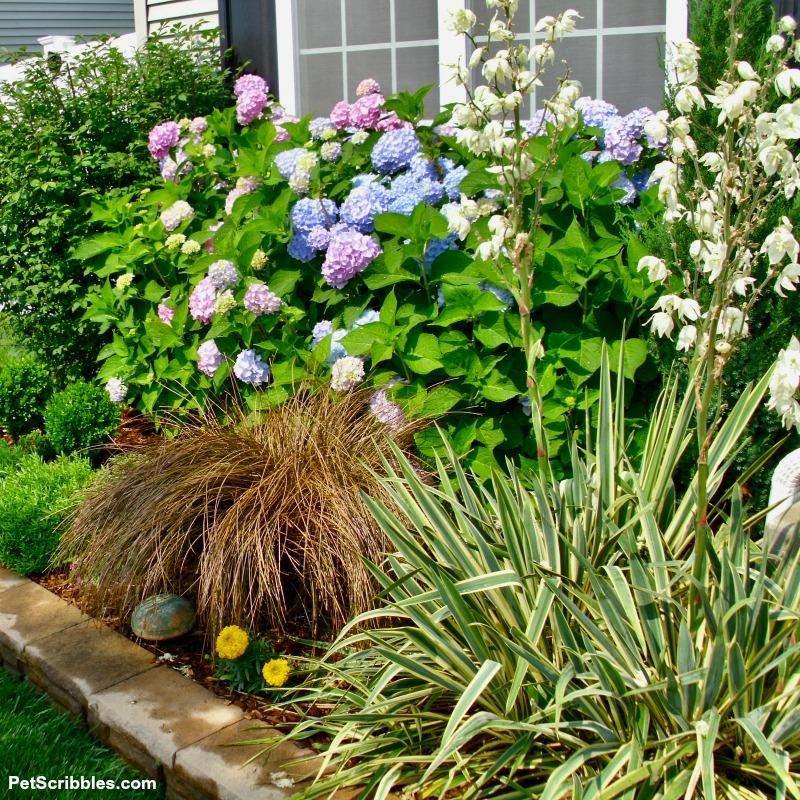 toffee twist sedge grass in garden bed in Summer