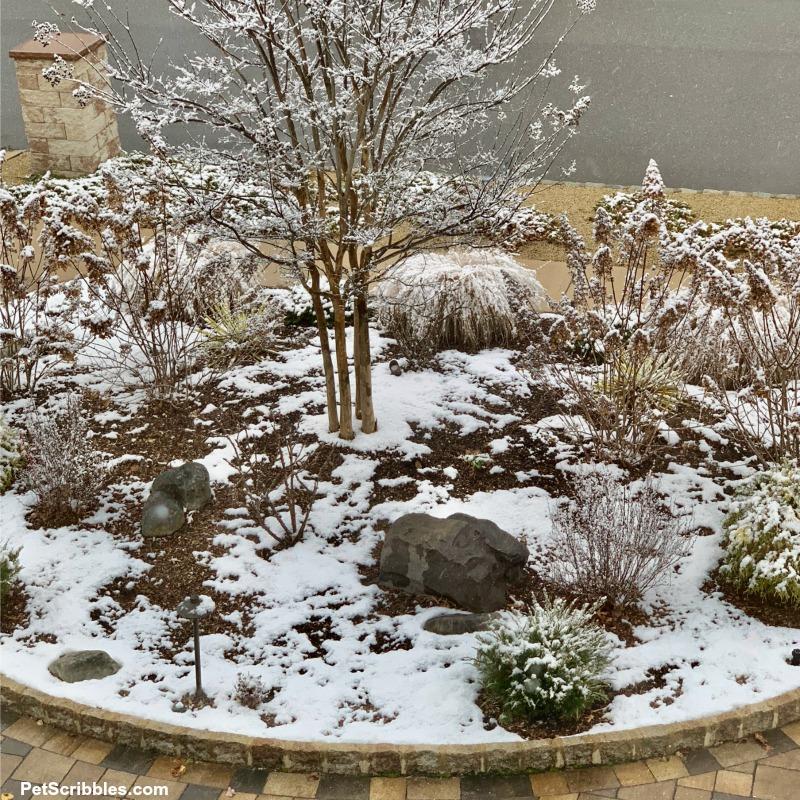Winter garden scene with snow