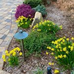 Spring Flowers: images from my garden