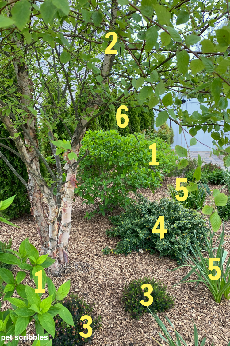 trees and shrubs in a green garden identified