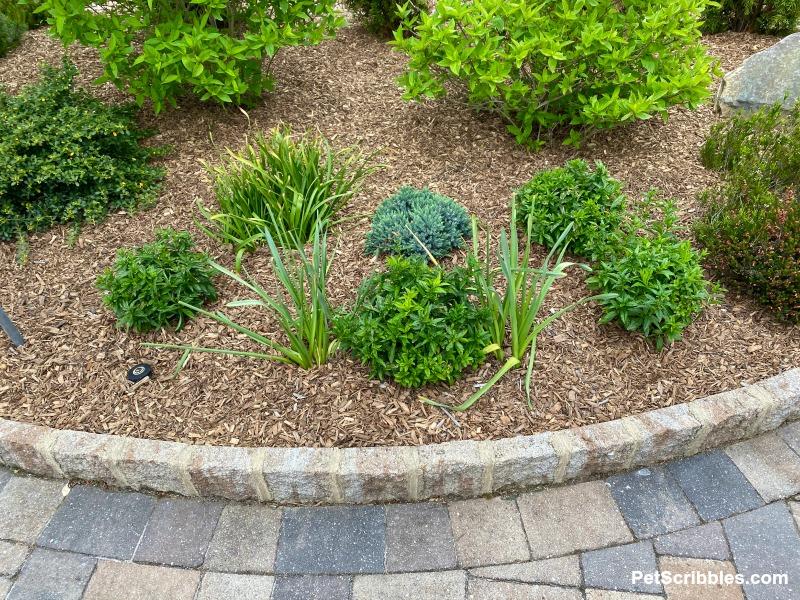 Spring perennial garden bed