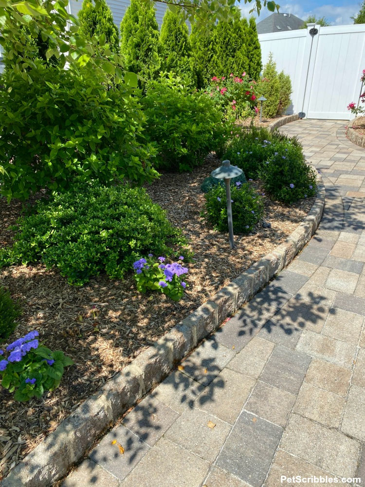 garden bed next to paver path
