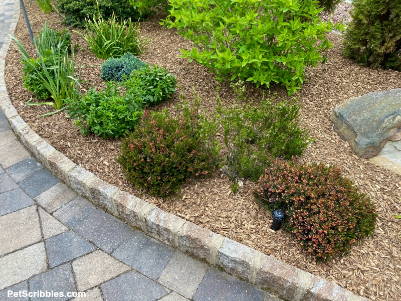 low shrubs and perennials