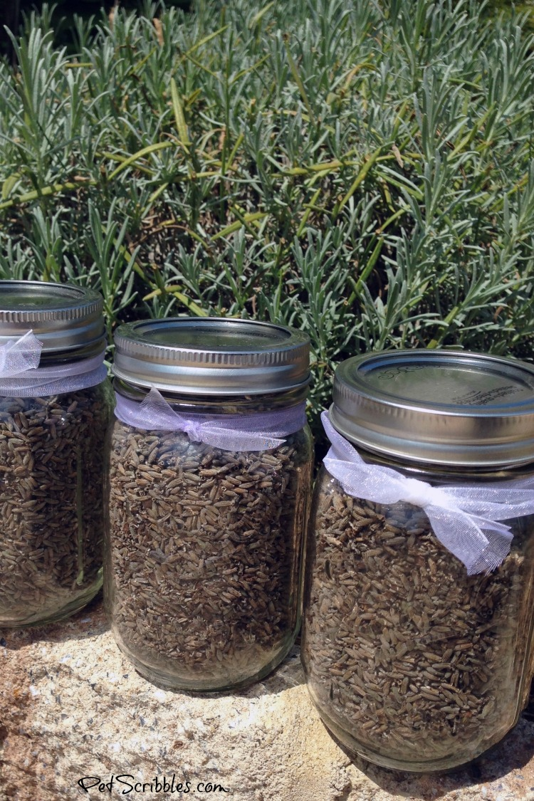 dried lavender in mason jars with ribbon