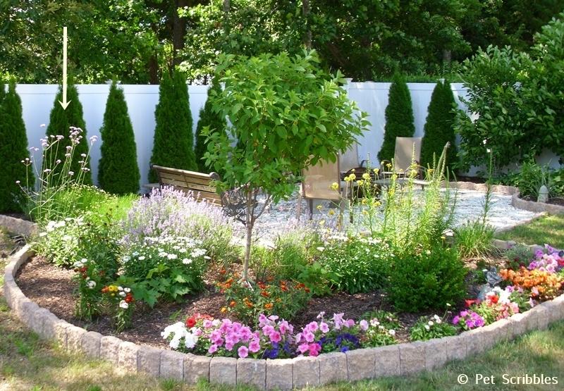 Verbena bonariensis in a Summer perennial garden