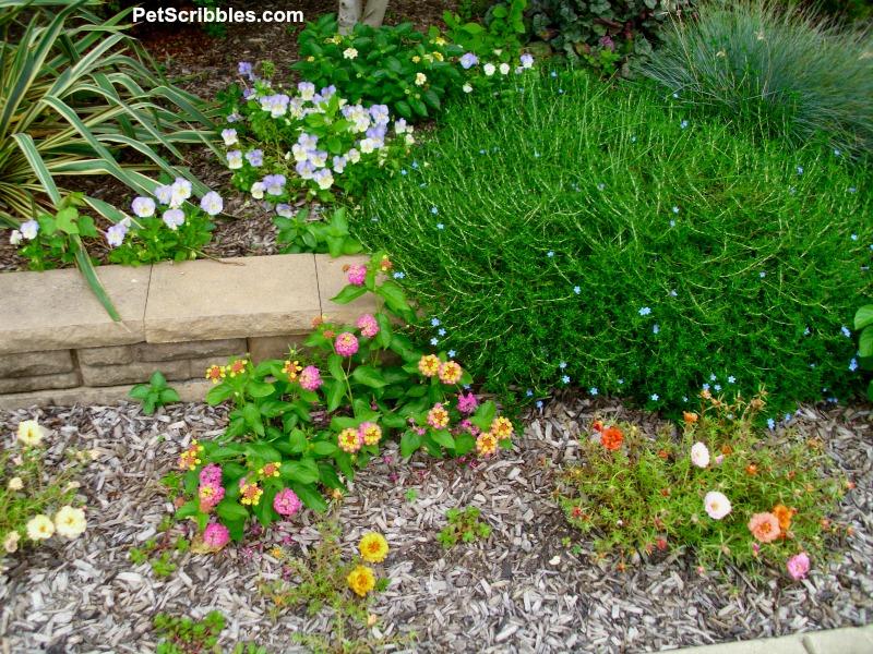 small summer garden flowers