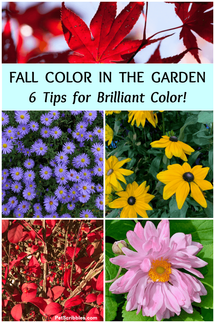 colorful examples of Fall color in the garden