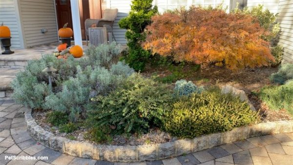 Fall color in foundation garden beds