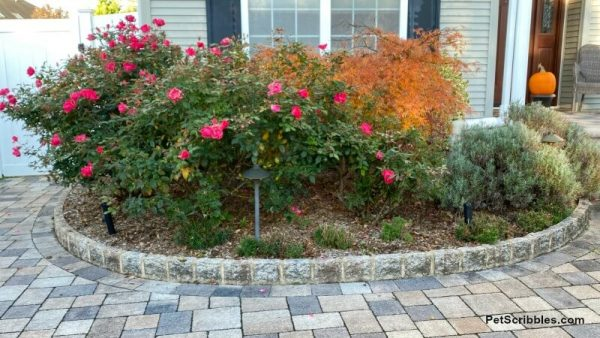 foundation garden beds in Fall