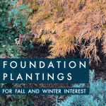 Foundation garden beds in Fall: a November garden tour