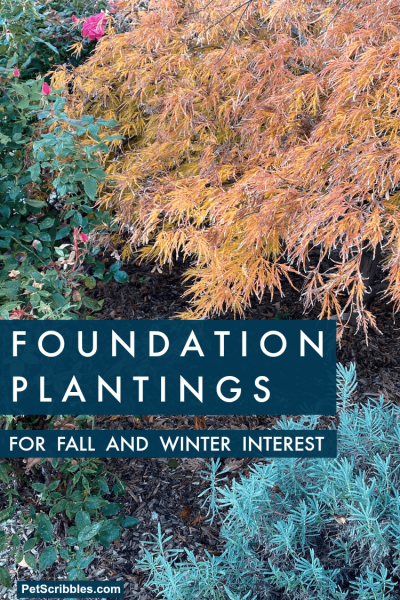foundation plantings for Fall and Winter interest