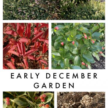 early December garden tour