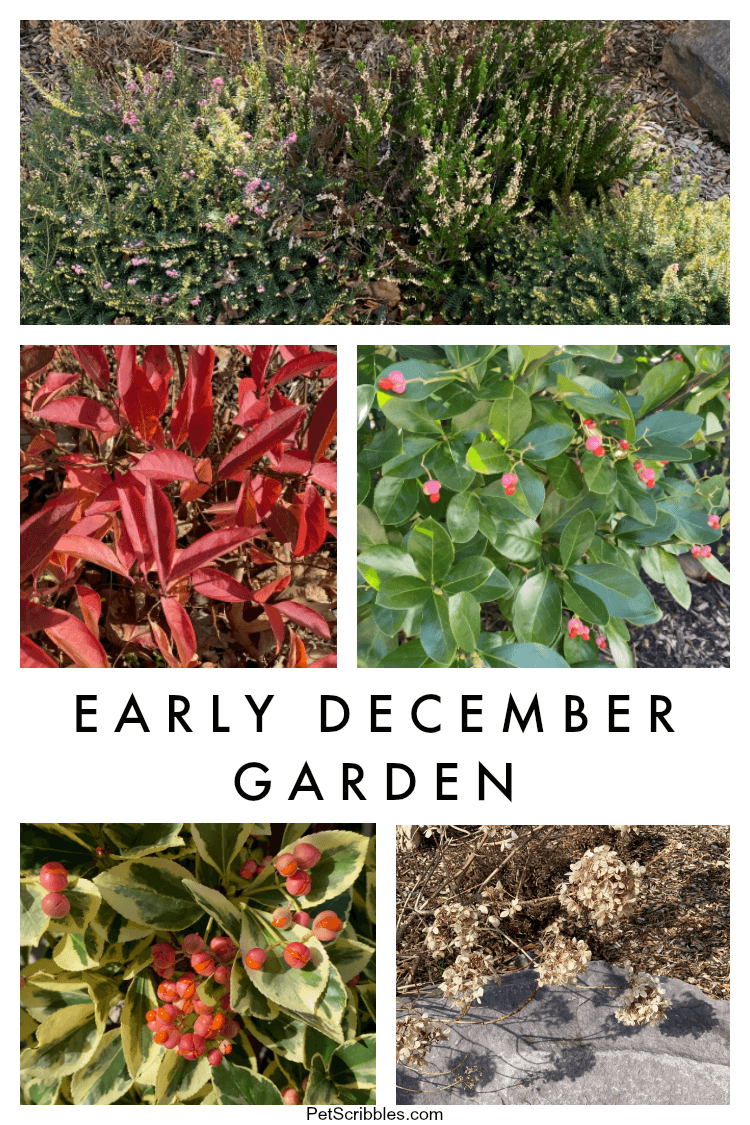 early December garden tour