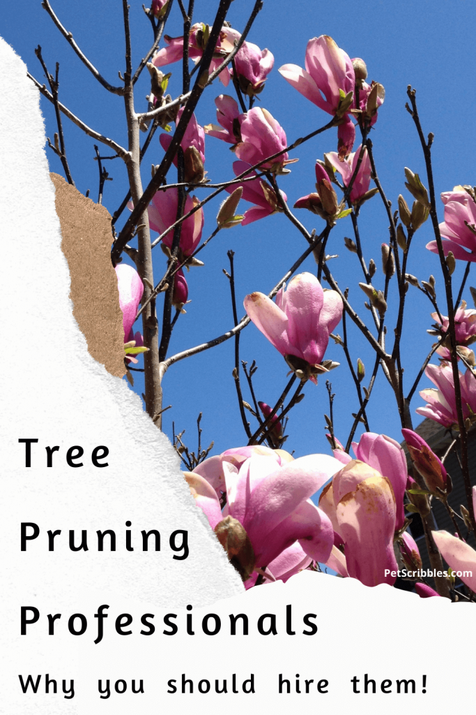 Why use tree pruning professionals