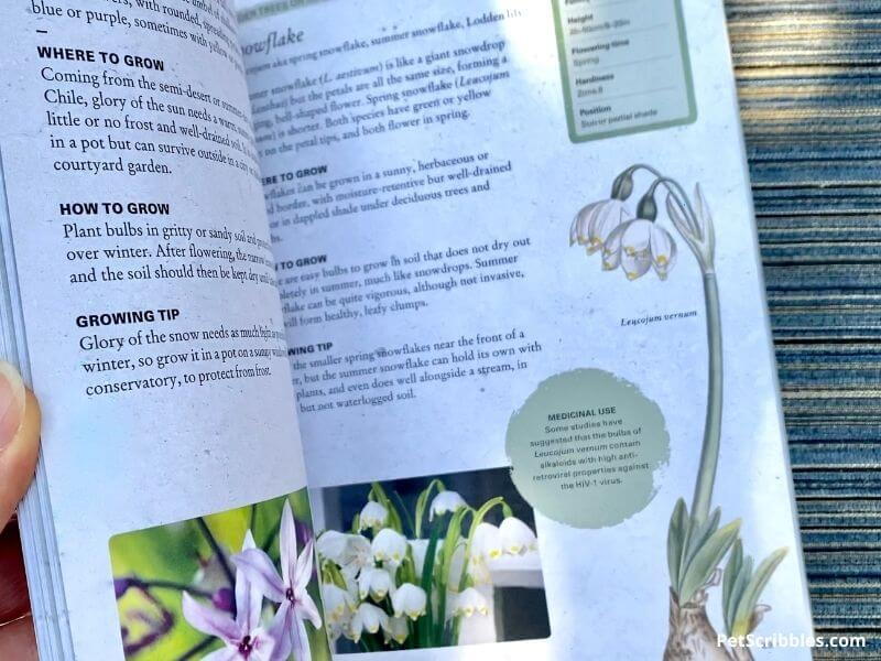 pages from the Growing Bulbs book