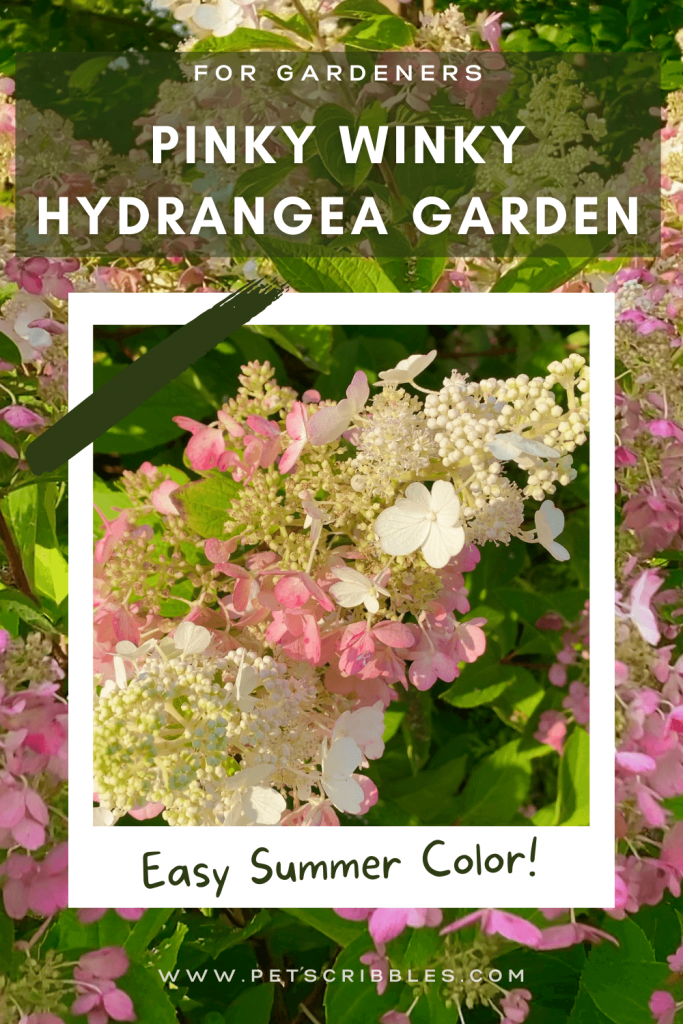 Pinky Winky Hydrangea Garden