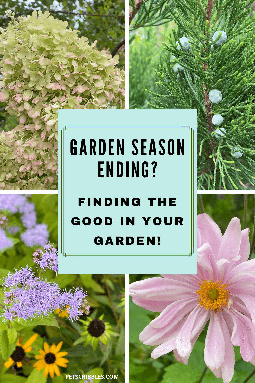 Today I'm sharing a photo and video collage of what's blooming in my zone 7, Southern New Jersey garden. I'm doing this to encourage you to do the same and find the good in your garden — after a season of heat, humidity, tropical storms, floods and whatever else Mother Nature has thrown at us this year!  via @petscribbles
