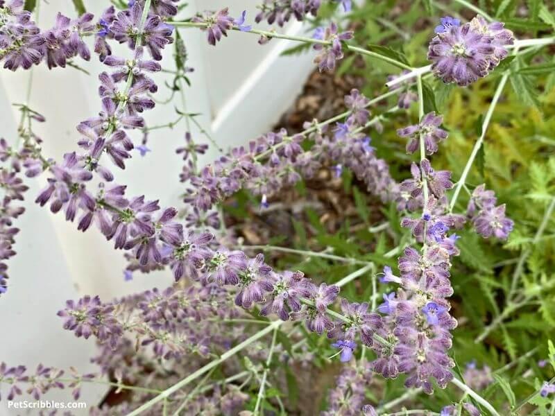 dried flowers look good in your garden